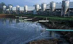 Poop lagoon via factory farm
