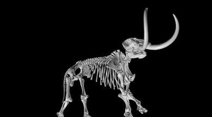 Scan of 3-D mammoth bones.