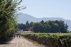 Laborers ride to work at the Viu Manent Winery in Valle Colchagua in central Chile.