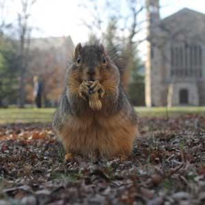 Modern-day squirrel