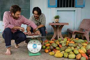 Weighing the cacao pods