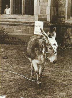 Donkey in the Law Quad.
