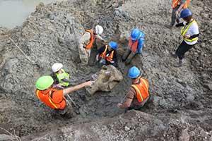 U-M-led team excavates the mastodon's skull Oct. 15 at the site in Michigan's Thumb region. (Image credit: Levi Stroud.)