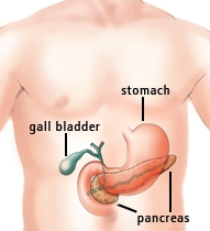 Pancreas graphic