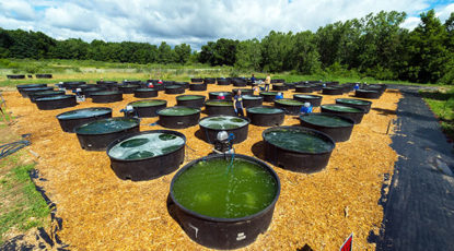 Various combinations of algal species were grown in 80 cattle tanks in a federally funded biofuels experiment at the University of Michigan's E.S. George Reserve near Pinckney, Mich. Each of the 290-gallon cattle tanks contains from one to four freshwater algal species. Image credit: Daryl Marshke, Michigan Photography