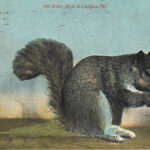Squirrel, postcard, 1910
