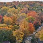 Pretty leaves, fall 20