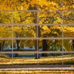pretty leaves, fall 2020