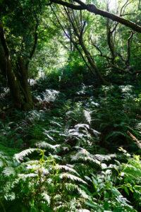Sunlight shining through trees on Bear Valley Trailhead in Marin County, California