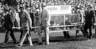 It's not quite true that Michigan never had a mascot. Fielding Yost himself introduced Biff and Bennie in 1927. But the creatures were so feral they lasted only a year before being shipped off to zoos. (Photo courtesy U-M Bentley Historical Library.)