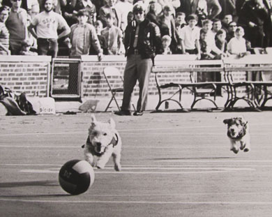 Whiskey and Brandy, cute dogs rather than vicious wolverines, were mascots of a sort during the late '60s and early '70s. (Photo courtesy Bentley Historical Society.)