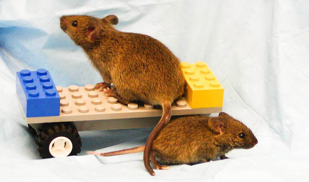 Mouse on a lego